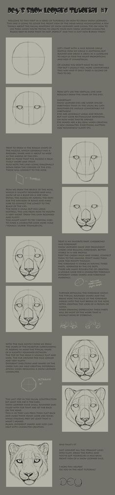 Tutorial: Snow Leopard Head #1: