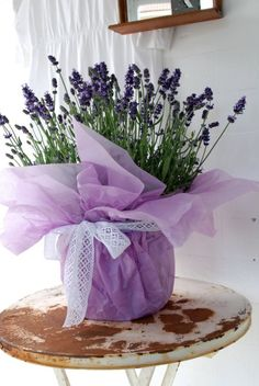 what do you think? Switch flowers, this could be cute, high impact low buget Provence, Flower Pots, Potted Lavender, Lavender Cottage, Lavender Blue, Lavender Fields, Potted Plant Centerpieces, Table Centerpieces, Ana Rosa