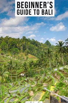 A beginner's guide to Bali, from where to stay to what to eat and bring back and what to see in Canggu, Nusa Dua, Seminyak, Uluwatu and Ubud | #Bali | #Indonesia | #TravelTips | #Asia Bali Travel, Luxury Travel, Beautiful Places To Visit, Beautiful Beaches, Travel Magazines, Ubud, Culture Travel, Amazing Nature, Traveling By Yourself