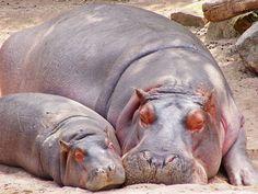 Mama & her baby; sleep tight precious souls