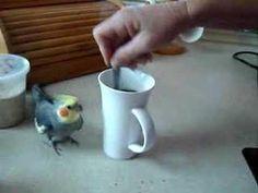 Bird Runs A Lap Around The Coffee Cup
