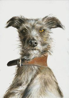 RCA postcard by Chrissy Wilson, 2007 via Dog Art Today Raining Cats And Dogs, Lurcher, Tier Fotos, Pet Dogs, Doggies, Watercolor Animals, Whippet, Dog Portraits, Illustrations
