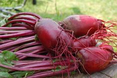 Owing to this fact, however, can dogs eat beets? My simple and straightforward answer is; But, let's find out why, and in what proportion beets are safe for dogs. Beets Health Benefits, Fruit Benefits, Love Beets, Red Beets, Red Juice Recipe, List Of Veggies, Healthy Foods To Eat, Healthy Recipes, Healthy Tips