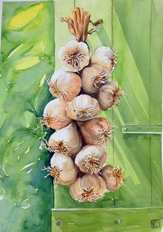 """""""la treccia d'aglio """" acquerello di Lorenza Pasquali 35x51"""