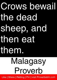 Crows bewail the dead sheep, and then eat them. - Malagasy Proverb #proverbs #quotes