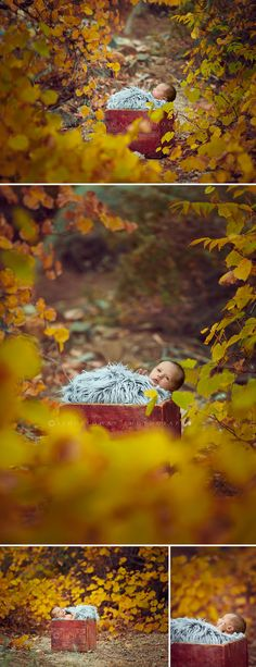 My Sweet Autumn Baby {Kingman Arizona Newborn Photographer   Las Vegas Newborn Photographer}