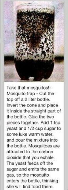 Take that mosquitoes!- Mosquito trap - Cut the top off a 2 liter bottle. Invert the cone and place it inside the straight part of the bottle. Glue the two pieces together. Add 1 tsp yeast and 1/2 cup sugar to some luke warm water, and pour the mixture into the bottle.