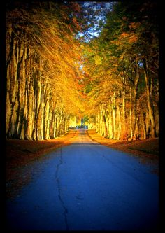 The main drive into Dunrobin Castle - Golspie, Scotland. Used to go down the hill on my rollerblades! Face planted the lawn down the side many a time.