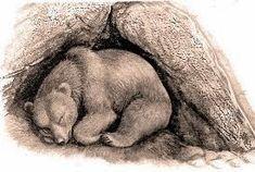 Μια φορά κι ένα παιδί...: Γιατί κάποια ζώα κοιμούνται το Χειμώνα;