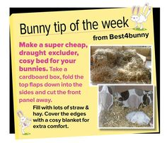 Make a super cheap cosy bed for your bunnies
