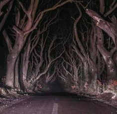 Your source for all of your nope-filled forest needs. Images, gifs or music, all to set the mood. Scary Woods, Paranormal Pictures, Scary Images, Forest Drawing, Spooky Trees, Forest Pictures, Night Forest, Visual Aesthetics, Forest Photography