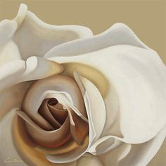 White Rose Giclee Print by Carolina Alotus Vanilla Cream, French Vanilla, Mocca, Touch Of Gold, Creamy White, White Roses, Flower Art, Creme, Giclee Print