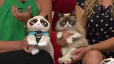 Grumpy Cat is hawking the plush toy on #QVC this weekend. It's a QVC exclusive. (Yes, I bought one for me and my big sis!)