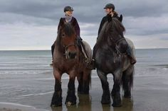 Fb_Horse Lovers_Belgian Brabante or purebred Ardennes/Ardennais?