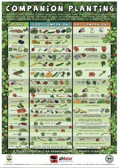 A Companion Planting Poster, to figure out what plants can go together and which ones need to apart.: