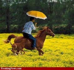 Man riding a horse and holding an umbrella Brown Horse, Happy Spring, Equinox, Horse Riding, Art Photography, Horses, Winter, Umbrellas, Landscapes