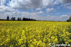 Uprawy uratowane - wiosenny deszczyk