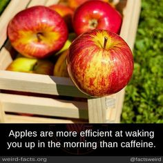 Low carb apple cider vinegar can be used anywhere regular vinegar is used including cooked foods as well as salad dressings. Negative Calorie Foods, Zero Calorie Foods, No Carb Diets, Amish Recipes, Whole Food Recipes, Cook In A Bag, Apple Pie Ingredients, Deep Dish Apple Pie, Making Apple Cider