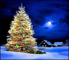 Árvore de Natal e Lua