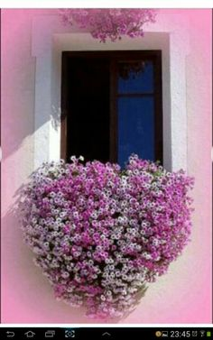 Window Boxes are like wearable art for your home. Here are a few Beautiful Window Box Planter Ideas that I hope can get you some inspiration. Bloom, Pretty In Pink, Beautiful Flowers, Beautiful Gorgeous, Flower Window, Garden Windows, Window Boxes, Window Sill, Balcony Window