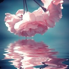 reflection of pink