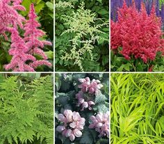 Tough as Nails Deer-Resistant Garden for Shade13 plants