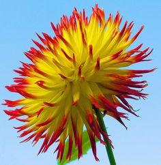 flower in Longwood Gardens