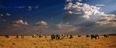 Elefanten - in Farbe   fotoforum.de