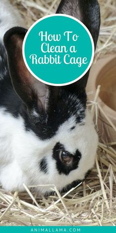 How to Clean a Rabbit Cage: Daily & Weekly Cleaning Activities- Keeping our rabbits' cage clean and smelling fresh is vital for our pets' happiness and well-being. Learn how to clean a rabbit cage and which cleaning activities you should be doi Pet Bunny Rabbits, Meat Rabbits, Bunnies, Raising Rabbits, Bunny Bunny, Bunny Cages, Rabbit Cages, Diy Bunny Cage, Rabbit Life