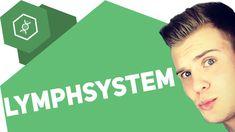 Das Lymphsystem - Organe des Menschen