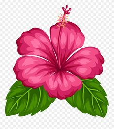 Best 12 Blue Tropical Flowers Png Clipart – Page 215469163408789817 Tropical Flowers, Hawaiian Flowers, Hibiscus Flowers, Exotic Flowers, Hibiscus Clip Art, Hibiscus Flower Drawing, Image Transparent, Deco Jungle, Illustration Blume