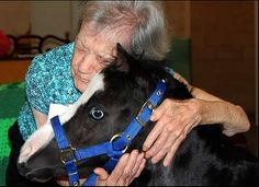 Magic, a miniature horse from Florida -- click and read!!