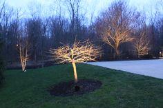 Belysning i träd