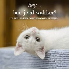 Goede morgen Cute Good Morning Quotes, Good Morning Texts, Good Morning Wishes, Kittens Cutest, Cute Cats, Funny Cats, Morning Greeting, Morning Messages, Animals And Pets