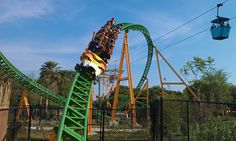 I've never rode it, but it's Intamin, so it's gotta be good. Bush Garden Florida, Busch Gardens Tampa Bay, Dream Vacations, Cheetah, Family Travel, Places To Go, Ferris Wheels, Around The Worlds, Roller Coasters