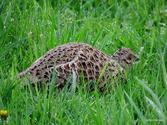 Hiding ... http://godisindestilte.blogspot.nl/2017/04/hiding.html