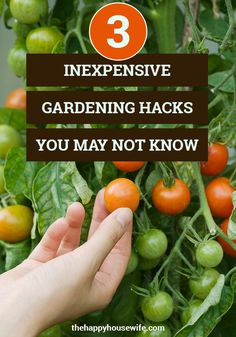 Gardening doesn't have to be expensive. Here are some of our favorite frugal gardening hacks to help you save money in the garden. Raised Garden Bed Plans, Container Vegetables, Spring Projects, Nature Study, Ways To Save Money, Natural Living, Frugal Living, Gardening Tips, Saving Money