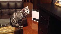 おやつの入った引出しを開けようと奮闘する猫。意外な結末が・・・(アメショーてんトイ)
