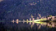 https://flic.kr/p/Ze2TMo | Trær ved vatn -|- Trees by lake