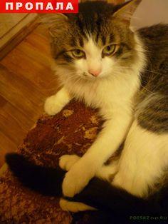 Пропал кот г.Магнитогорск http://poiskzoo.ru/board/read33424.html  POISKZOO.RU/33424 Пропал кот в июле .. года в п. Черниговский, Агаповского района. Всем кто видел или нашел прошу позвонить!   РЕПОСТ! @POISKZOO2 #POISKZOO.RU #Пропала #кошка #Пропала_кошка #ПропалаКошка #Магнитогорск #Пропала_кошка_Магнитогорск