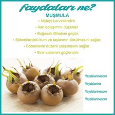 Muşmulanın faydaları nelerdir 2 benefits of Herbal Treatment, Natural Treatments, 3 Day Detox, Yoga Posen, Fitness Tattoos, Low Carb Diet, Viera, Healthy Weight Loss, Beauty Care
