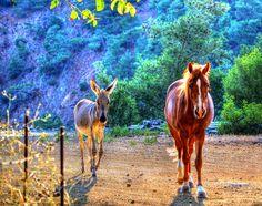 Horse Sense....!!!! by EcOnAnDrE, via Flickr