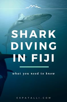 Is diving with sharks in Fiji safe and ethical? Who offers the experience and what's their conservation role? Shark Diving, Shark Swimming, Sharks, Fiji Culture, Culture Travel, Fly To Fiji, Shark Conservation, Fiji Beach, Phuket Travel