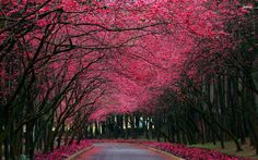 Pink Tree Wallpapers - Wallpaper Cave