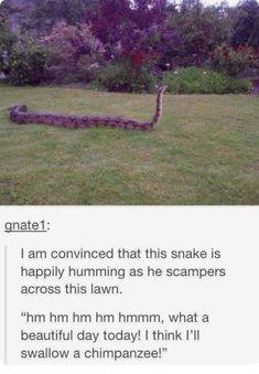 25 Funny Animal Memes – Funnyfoto   Funny Pictures - Videos - Gifs - Page 16
