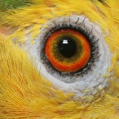 15 Parrot Eyes Really Close Up