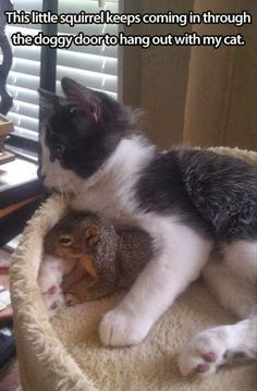 Cat and squirrel buddies