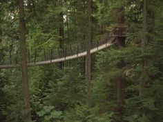 Vancover's Tree Top Adventures going to do this 2014!