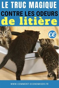 Cat Love, Animals, Info, British, Board, Cats, Cat Health, All About Cats, Dogs