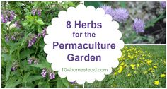 Top 8 Herbs for the Permaculture Garden #Gardening, #Gardens, #Herbs, #Permaculture #Gardening